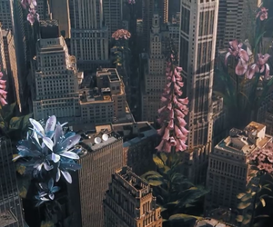 coldplay, city, and flowers image