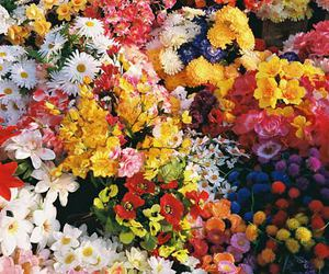 flowers, nature, and colorful image