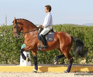 mare, portugal, and rider image