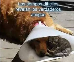amigos, quotes, and frases image