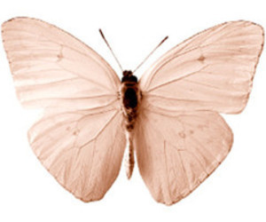 buterfly and lifee image