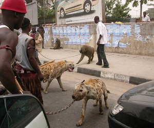 africa, ghetto, and hyena image
