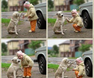 aw, cute, and dog image