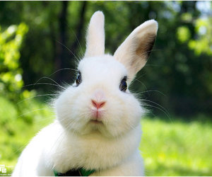 bunny, cute, and lovely image