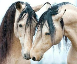 horse, sweet, and love image