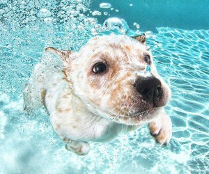 dog, puppy, and water image