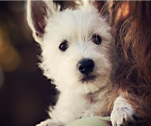dog, photography, and cute image