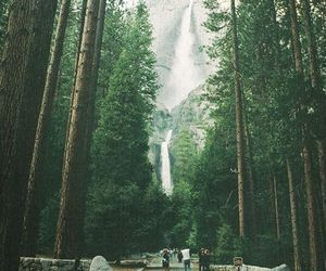 beautiful, forest, and people image