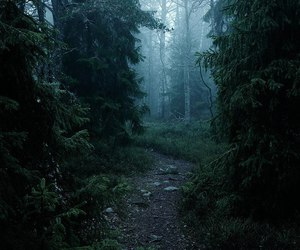 forest, fog, and nature image