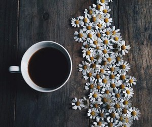 flowers, coffee, and daisy image