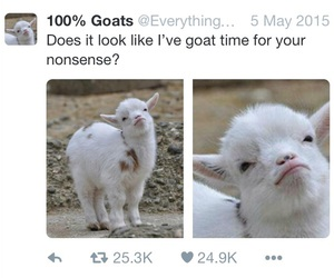 funny, goat, and puns image