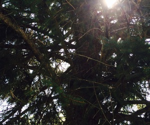 arbre, nature, and soleil image