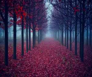 autumn, red, and nature image