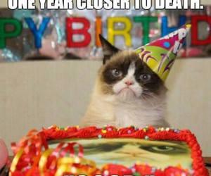 grumpy cat, birthday, and funny image
