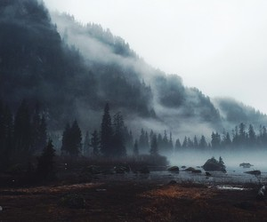 fog and woods image