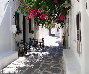 flowers, beautiful, and Greece image
