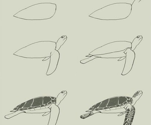 art, doodles, and turtle image