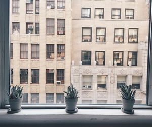 plants, nature, and new york image