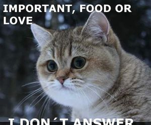 funny, food, and love image
