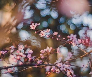 bokeh, spring, and cherry blossom image