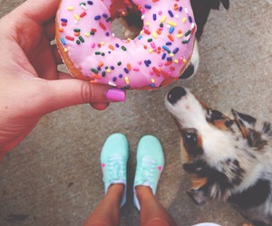 animals, donut, and funny image