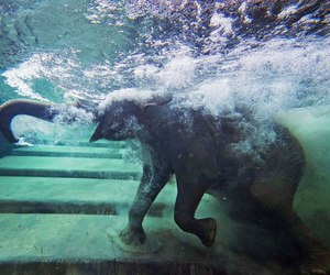 animal, elephant, and water image