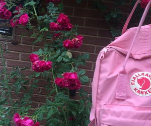 pink, kanken, and roses image