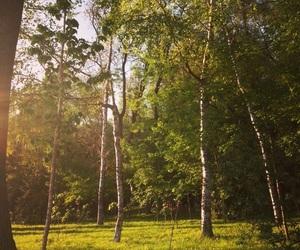 beautiful, green, and chisinau image