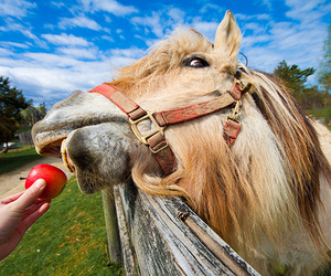 horse, animal, and apple image
