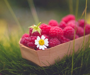 raspberry, berries, and flower image