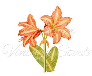 art, clipart, and botanical prints image