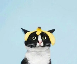 banana, funny, and cat image
