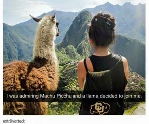 funny, llama, and tumblr image