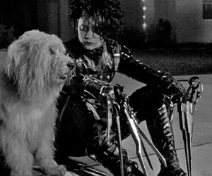 dog, johnny depp, and edward scissorhands image