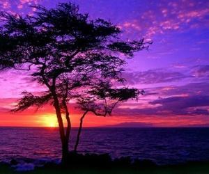 tree, sunset, and purple image