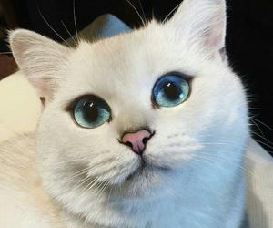 animal, beautiful eyes, and cat image