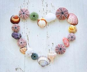 heart, seashells, and shell image
