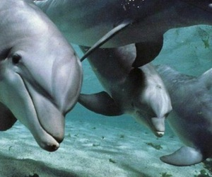 beauty, dolphins, and sea image