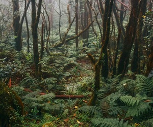 foggy, forest, and green image
