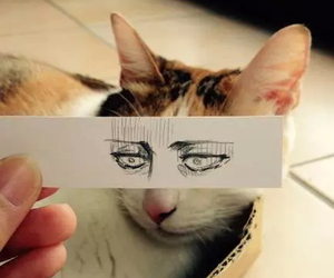 cat, eyes, and levi image