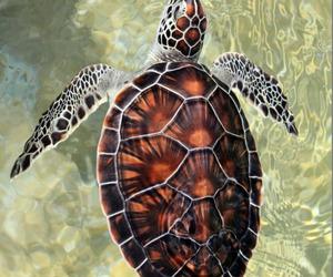animal, turtle, and nature image