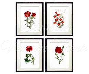 etsy, flower illustration, and flowers image