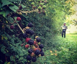 blackberries, summer, and wild blackberries image