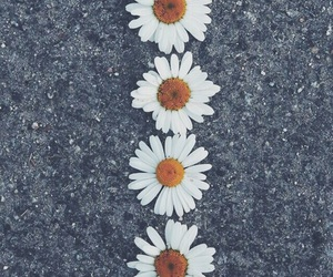 flowers, wallpaper, and daisy image