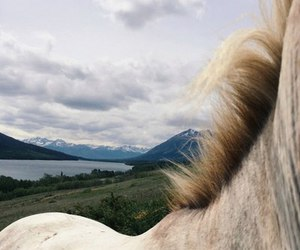 horse, nature, and travels image