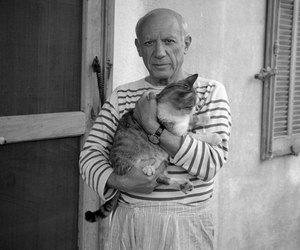 cat and Pablo Picasso image