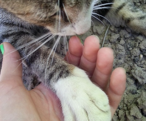 cat, miss you, and nails image