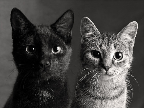 Black And Whitecatscutekittenphotography Inspiring Picture On