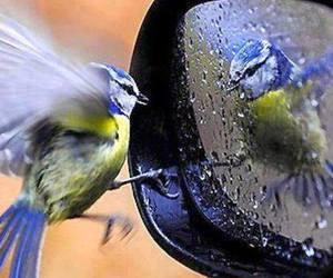 birds, rain, and cute image