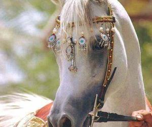 horse, animal, and arabian image